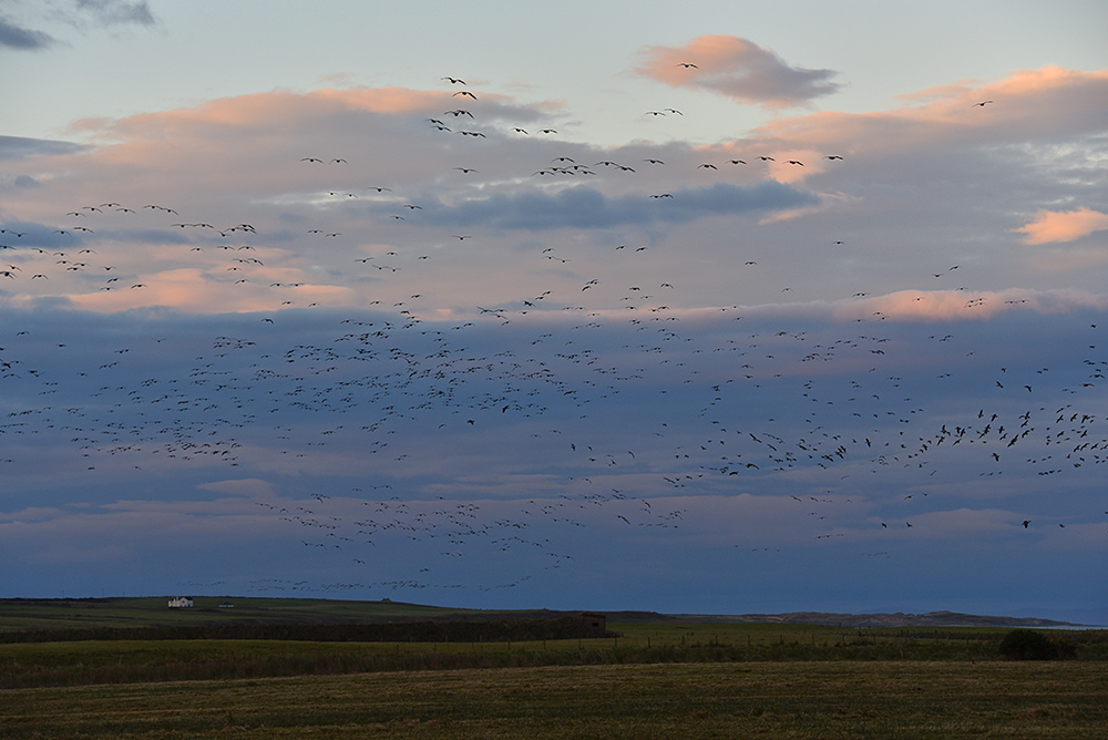 Picture of clouds over a wide landscape, many Geese in flight in the sky