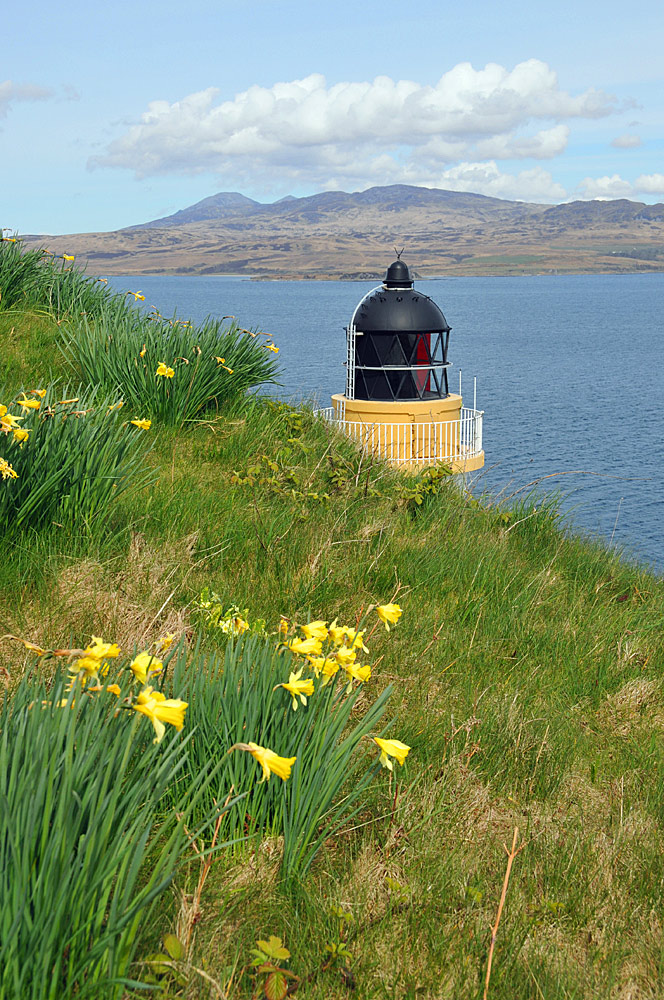 Picture of Daffodils with a lighthouse in the background