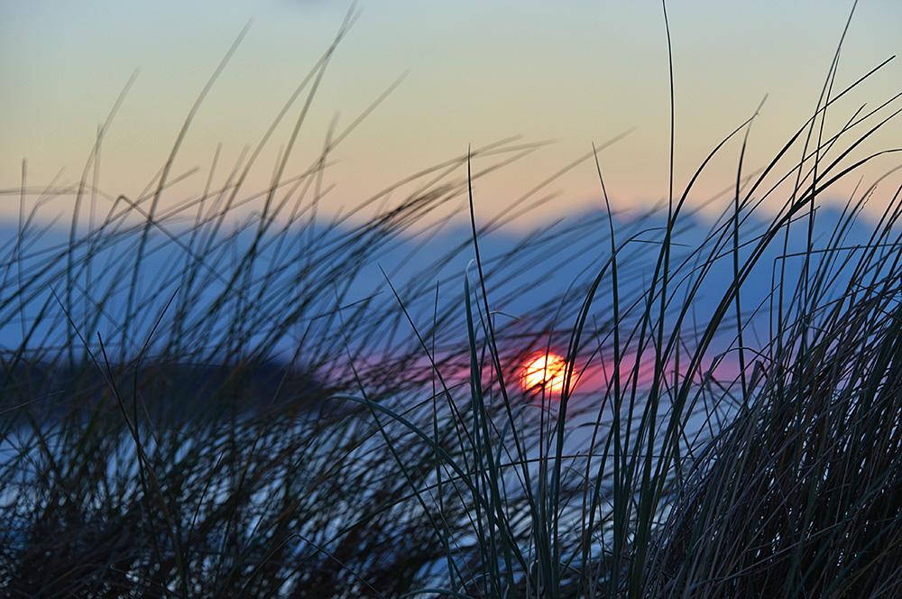 Picture of a sunset seen through dune grass