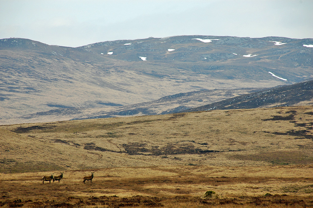 Picture of a hilly landscape with some deer and higher up snow patches