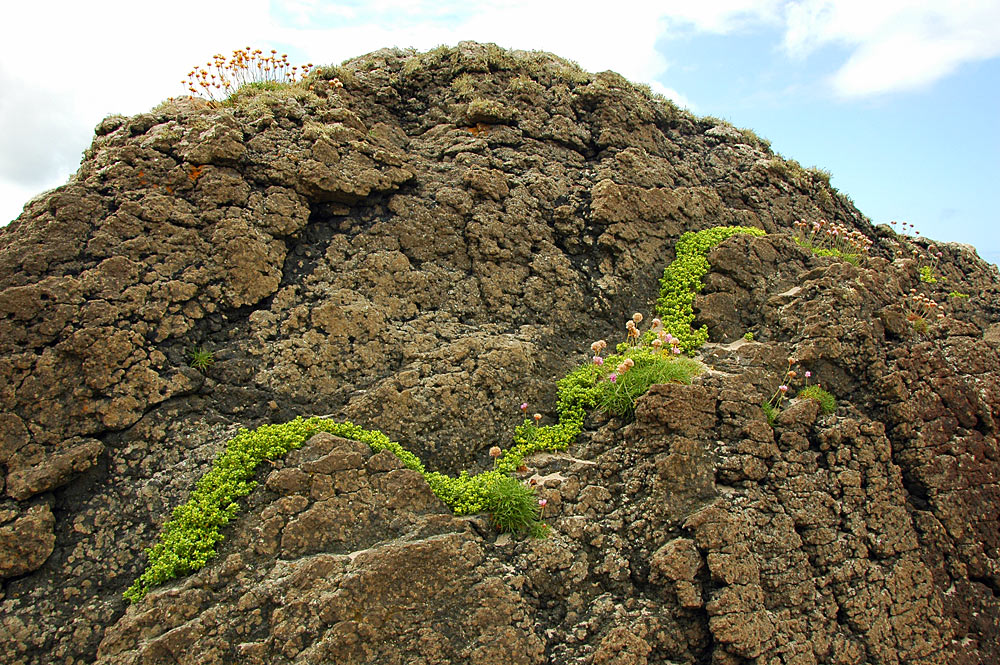Picture of a rock with plants growing in a wave form