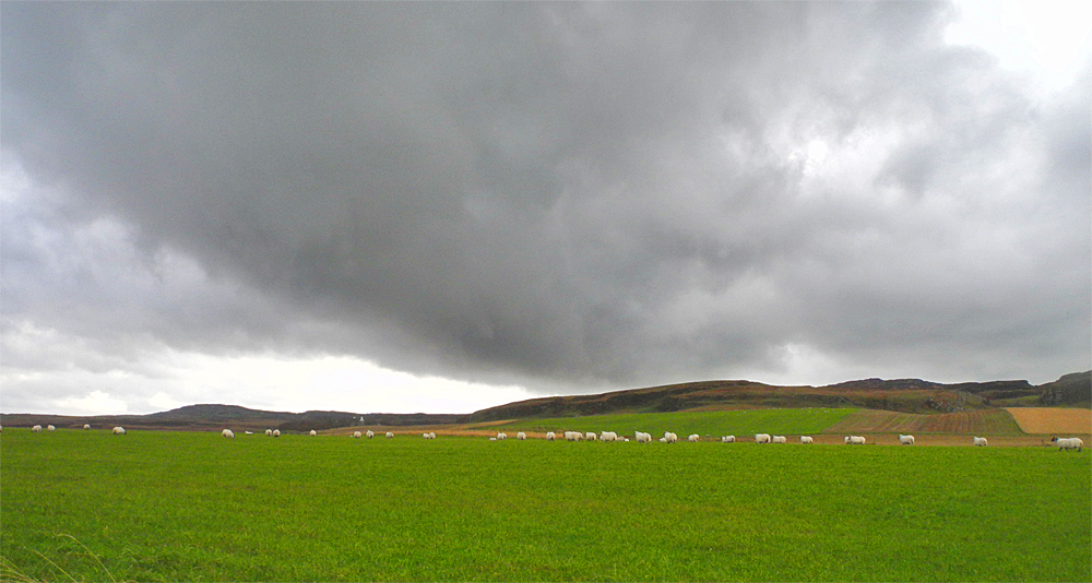 Picture of a number of sheep grazing on a field with dark clouds overhead