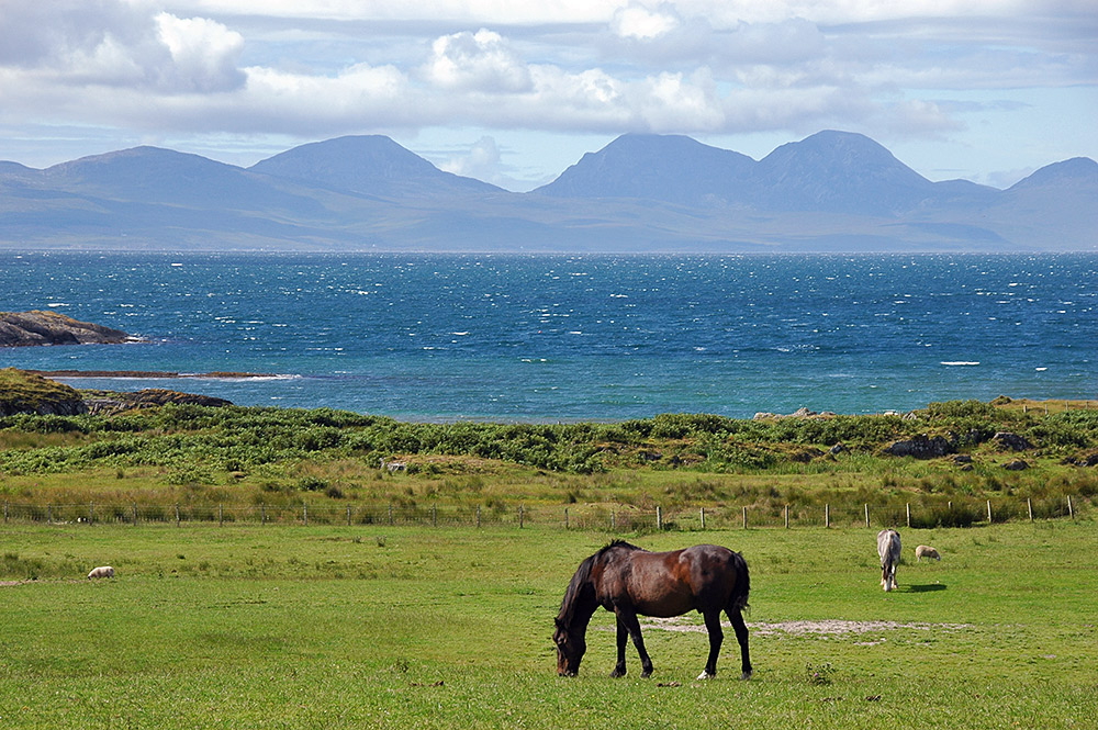 Picture of horses grazing in a field on an island, across the sea another island with high mountains is visible