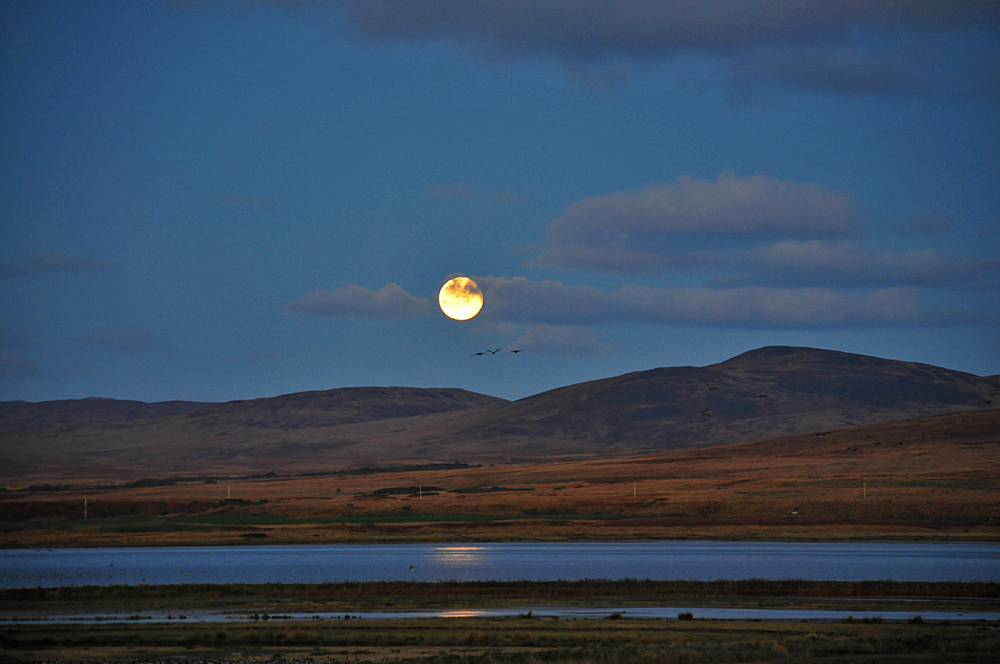 Picture of the Moon rising over a sea loch, three Barnacle Geese flying close to it