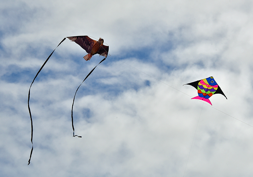 Picture of two kites, one resembling a bird of prey, the other a fish