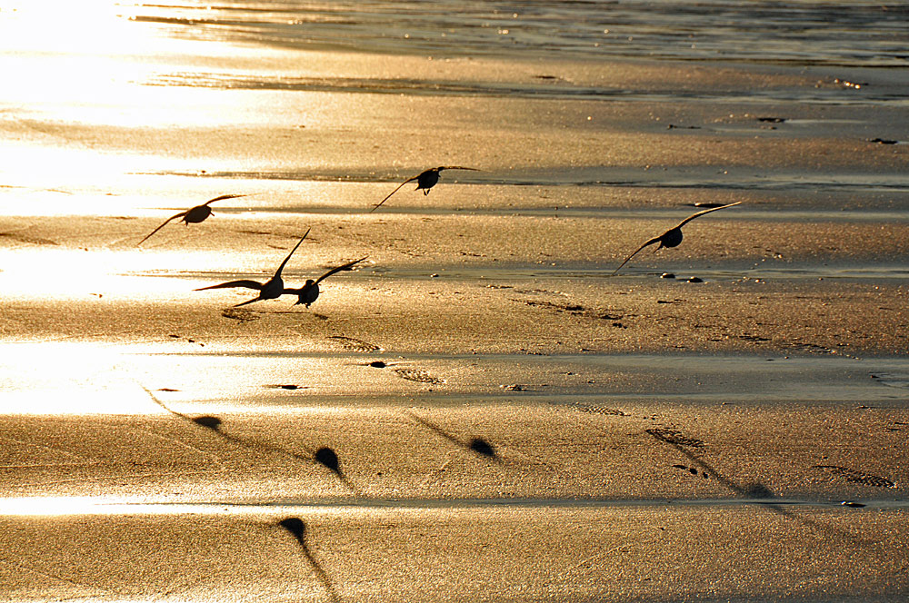 Picture of five birds flying low over a beach