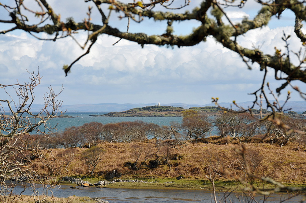 Picture of a small remote lighthouse seen through coastal trees