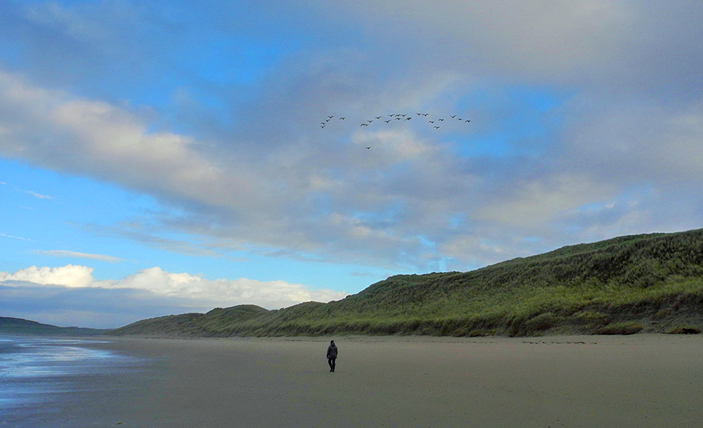 Picture of a flock of Whooper Swans flying over a beach with a lone walker