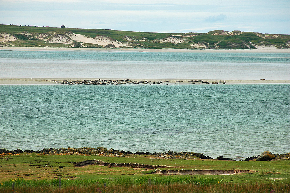 Picture of seals on a sand bank in a sea loch flanked by dunes