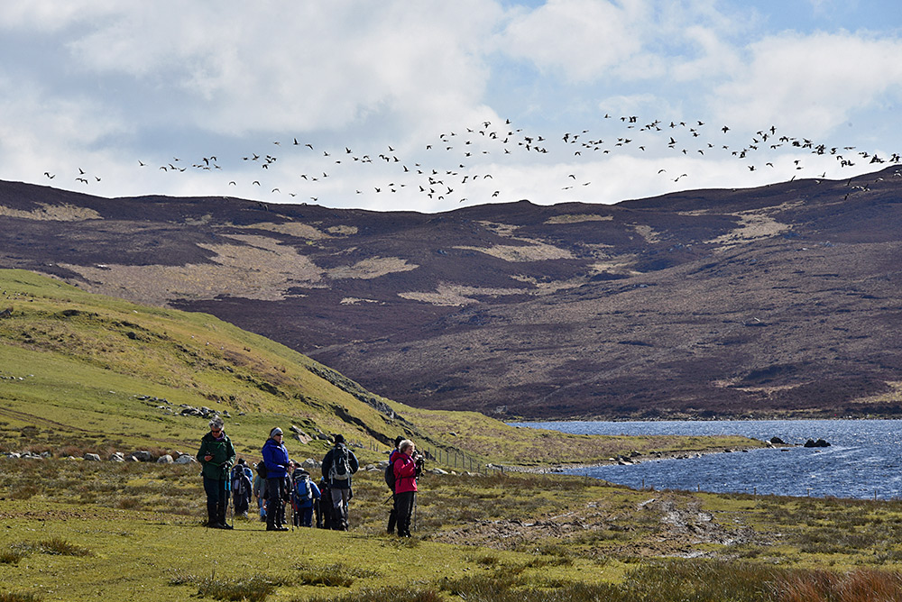 Picture of a group of walkers above a loch (lake), a flock of geese flying overhead