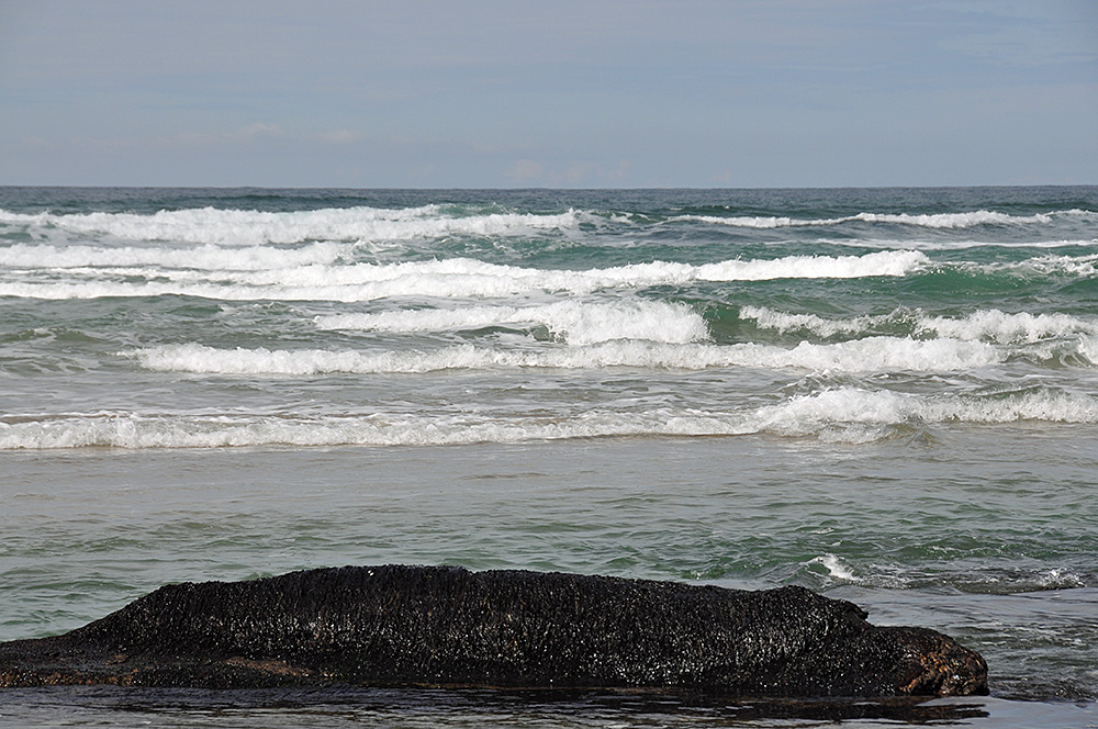 Picture of breaking waves rolling towards a seaweed covered rock