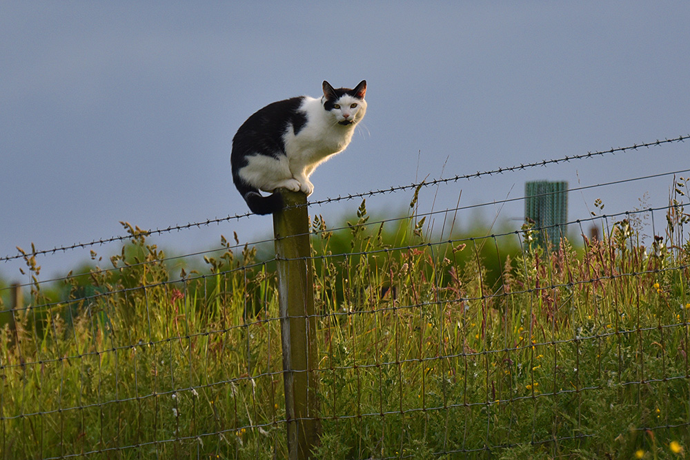 Picture of a black and white cat sitting on top of a fence post