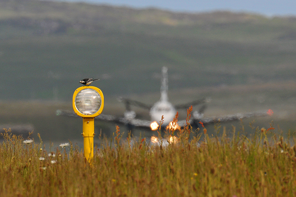 Picture of a Pied Wagtail on a landing light, a plane in the background