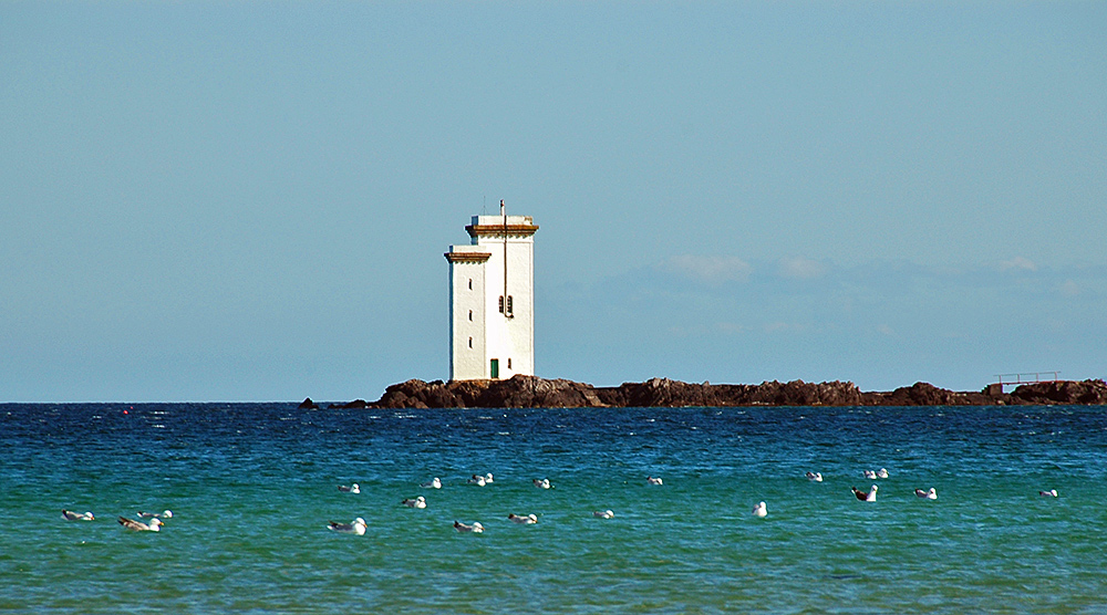 Picture of a group of seagulls on the water off a square lighthouse