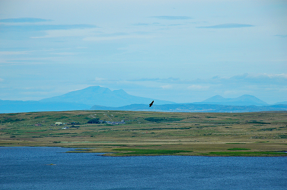 Picture of a Buzzard circling high above a freshwater loch on an island, other islands in the distance