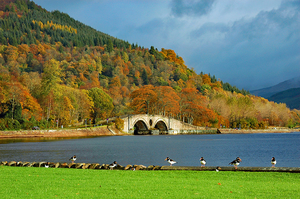 Picture of trees in autumn colours above a bridge on the shore of a loch