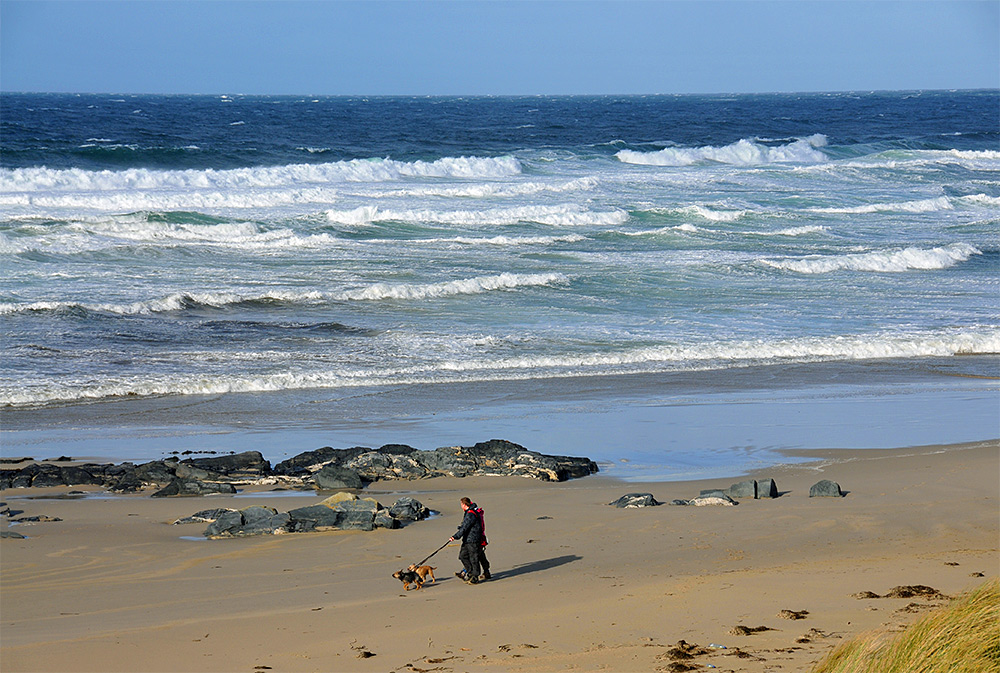 Picture of a couple walking their dogs on a beach, seen from dunes behind the beach