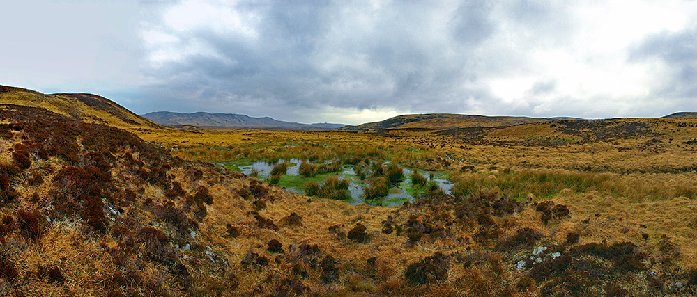 Picture of a tussocky and boggy wild landscape