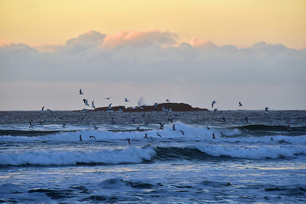 Picture of Gulls flying above breaking waves, rocks in the background