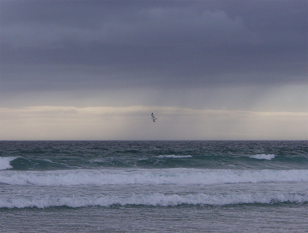 Picture of a shower passing off a shore with a beach, a gull flying past