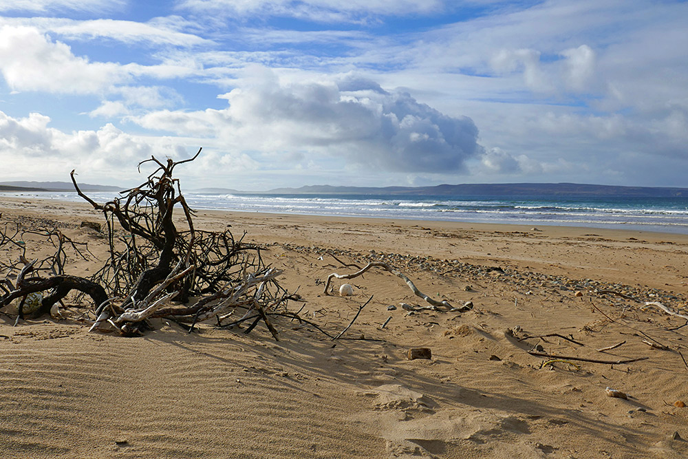 Picture of driftwood on a beach