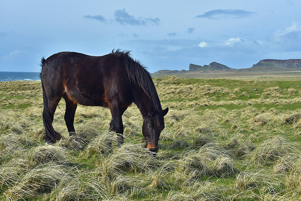 Picture of a horse grazing in dunes