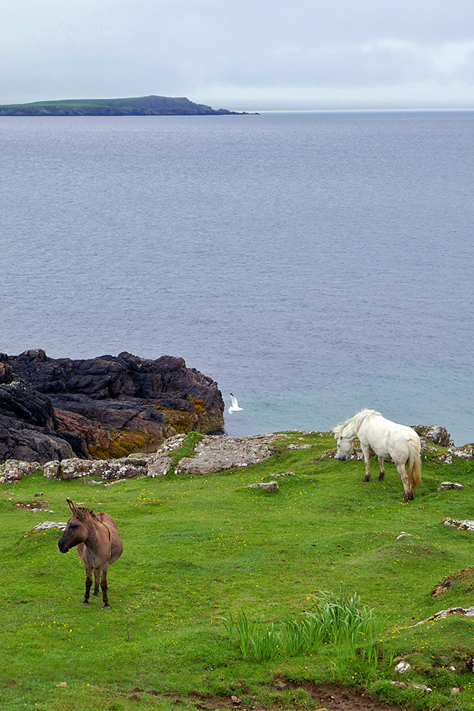 Picture of a donkey and a horse in a field on a shore