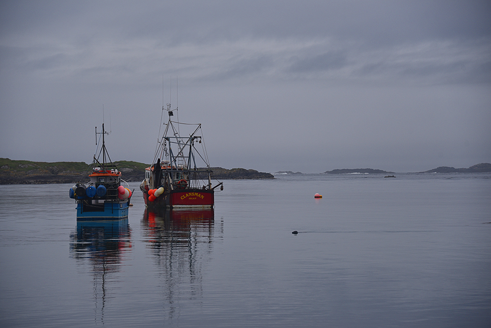 Picture of two moored fishing boats on a calm evening, a Seal swimming into view from the side