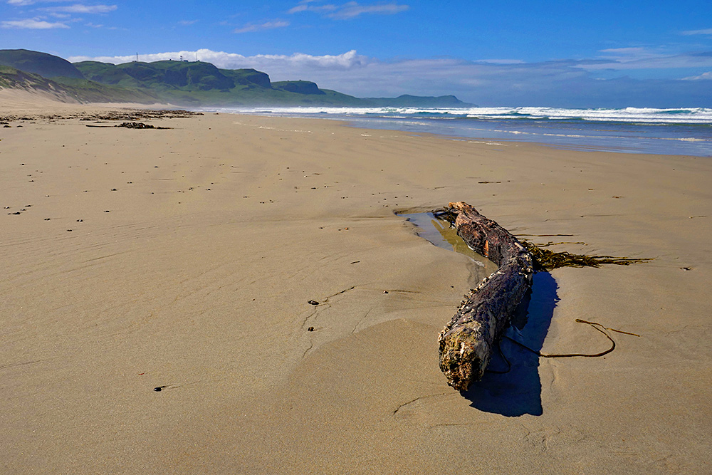Picture of some large driftwood on a golden sandy beach during a sunny interval