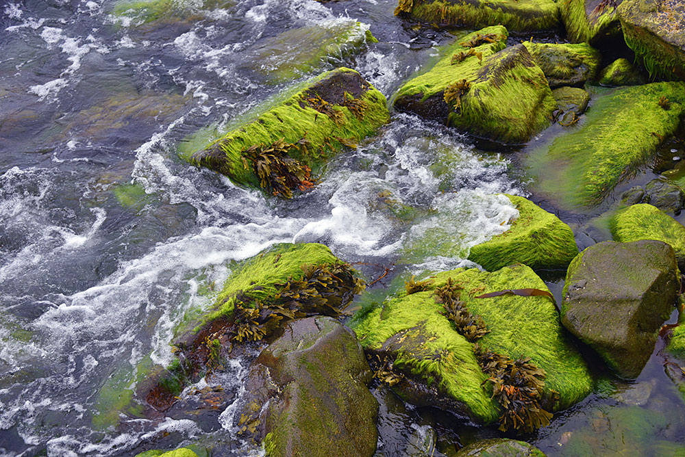 Picture of some rocks overgrown with algae, water swirling around them