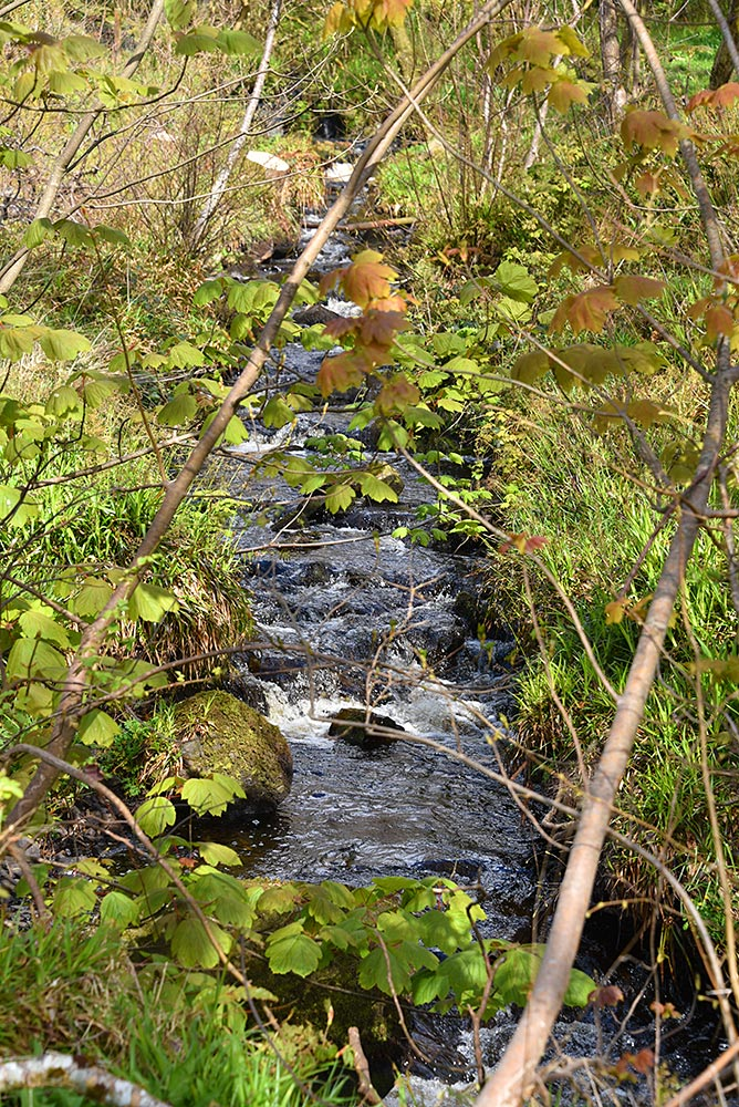 Picture of a small stream running through woodland