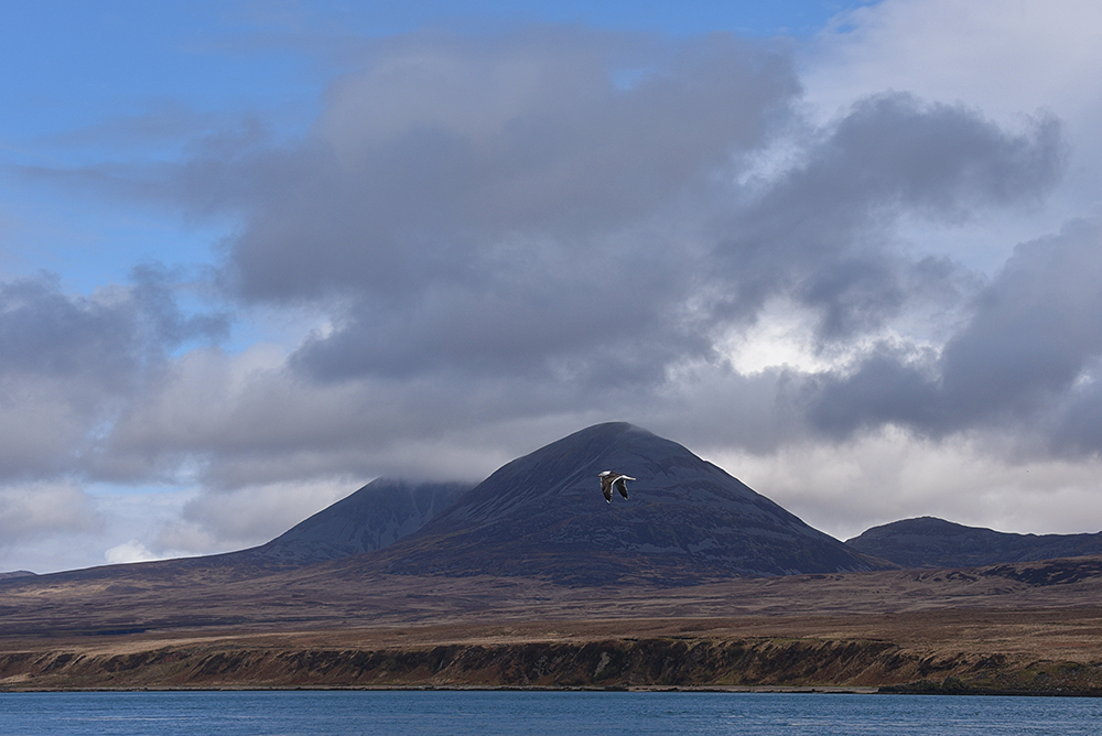 Picture of the Paps of Jura (mountains) seen from Islay with a gull in front of them