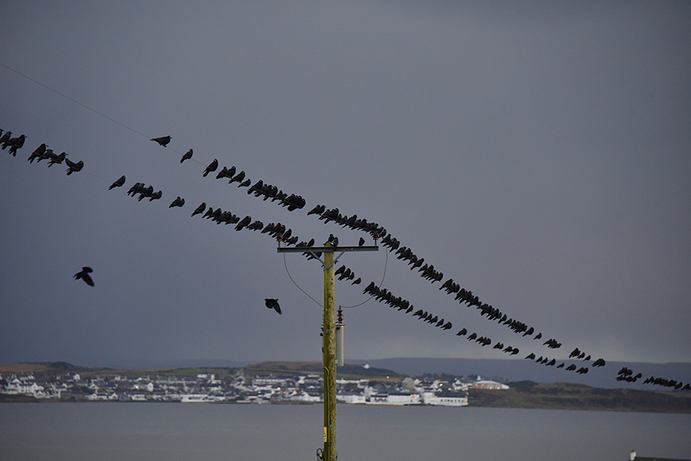 Picture of Rooks and Jackdaws on an overhead power line, a village in the background