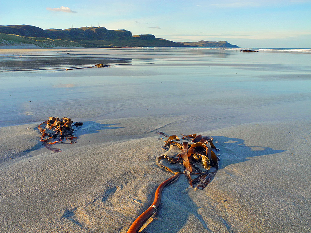 Picture of a morning on a sandy beach, some seaweed on the beach and a wreck in the distance