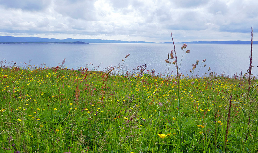 Picture of a flower meadow overlooking a sea loch on a cloudy day with bright intervals