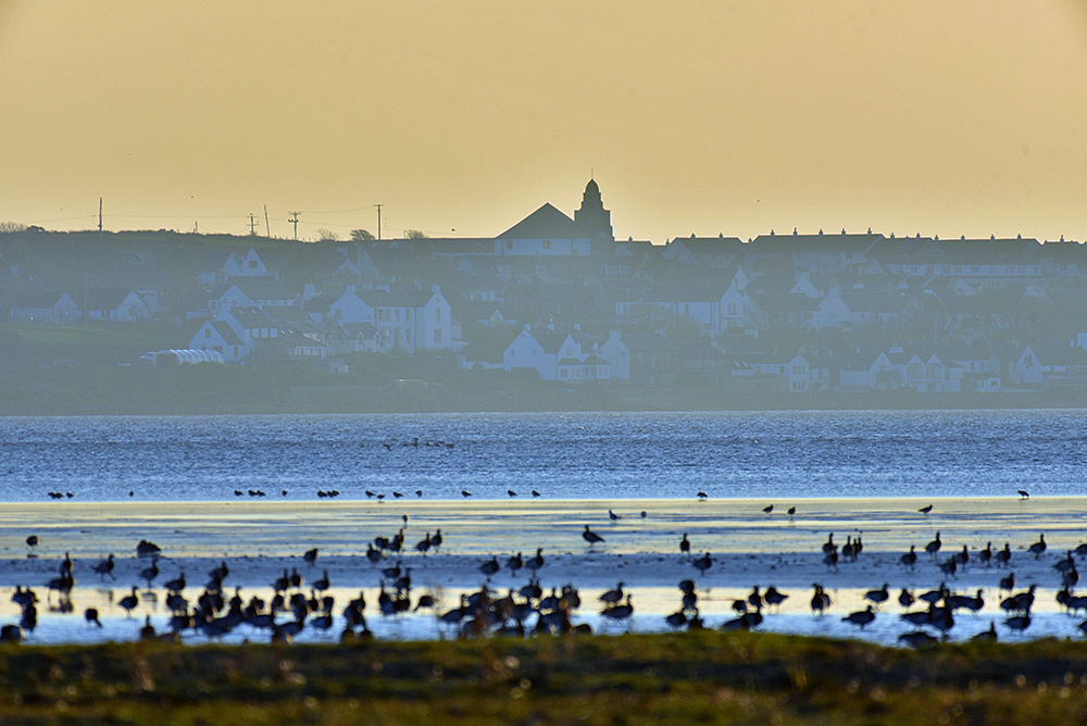 Picture of a view across a sea loch on a hazy sunny afternoon, geese in the foreground, village in the distance