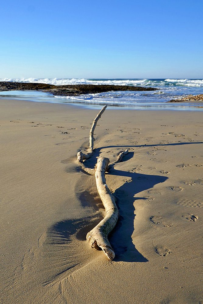 Picture of some large driftwood pointing towards a bay