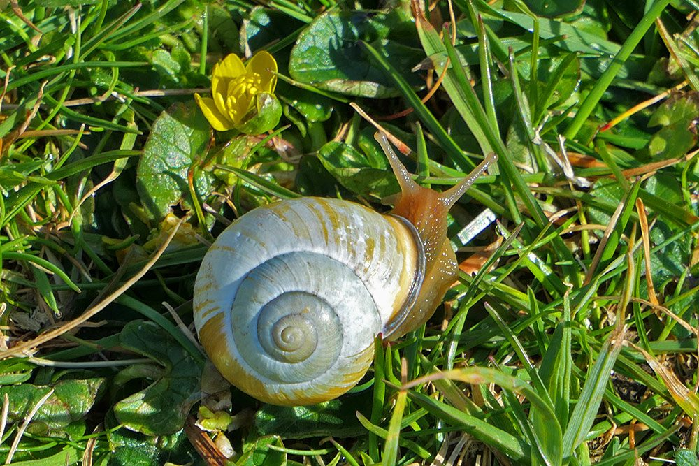 Picture of a snail in grass