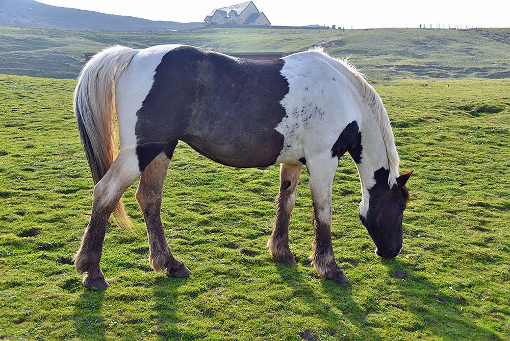 Picture of a horse grazing in a field with the mild light of the April afternoon sun illuminating the scene