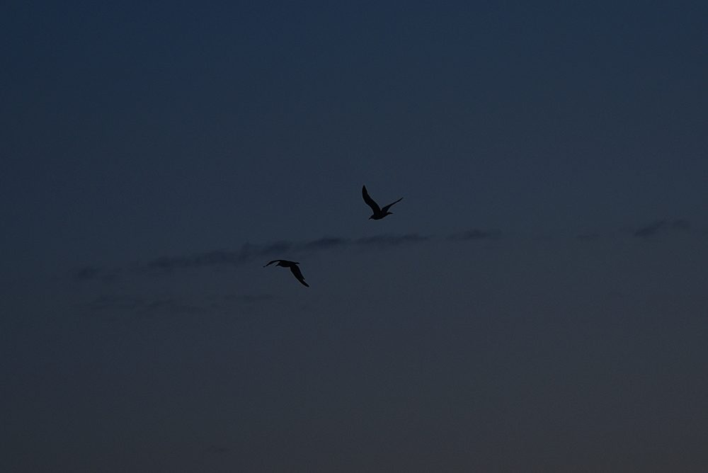 Picture of two birds in the late evening sky