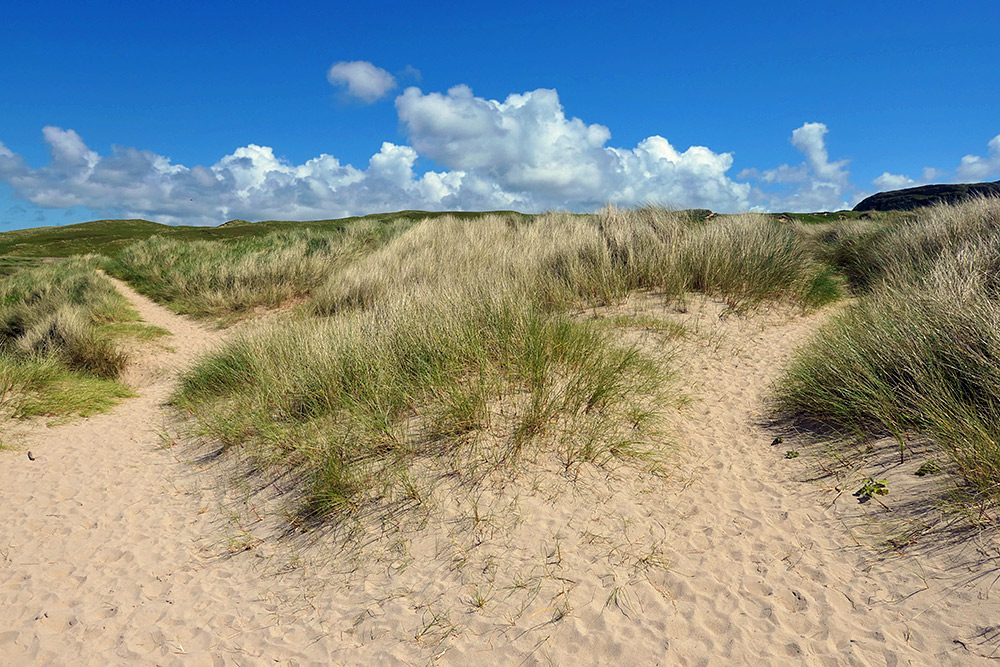 Picture of a path through dunes splitting into two paths