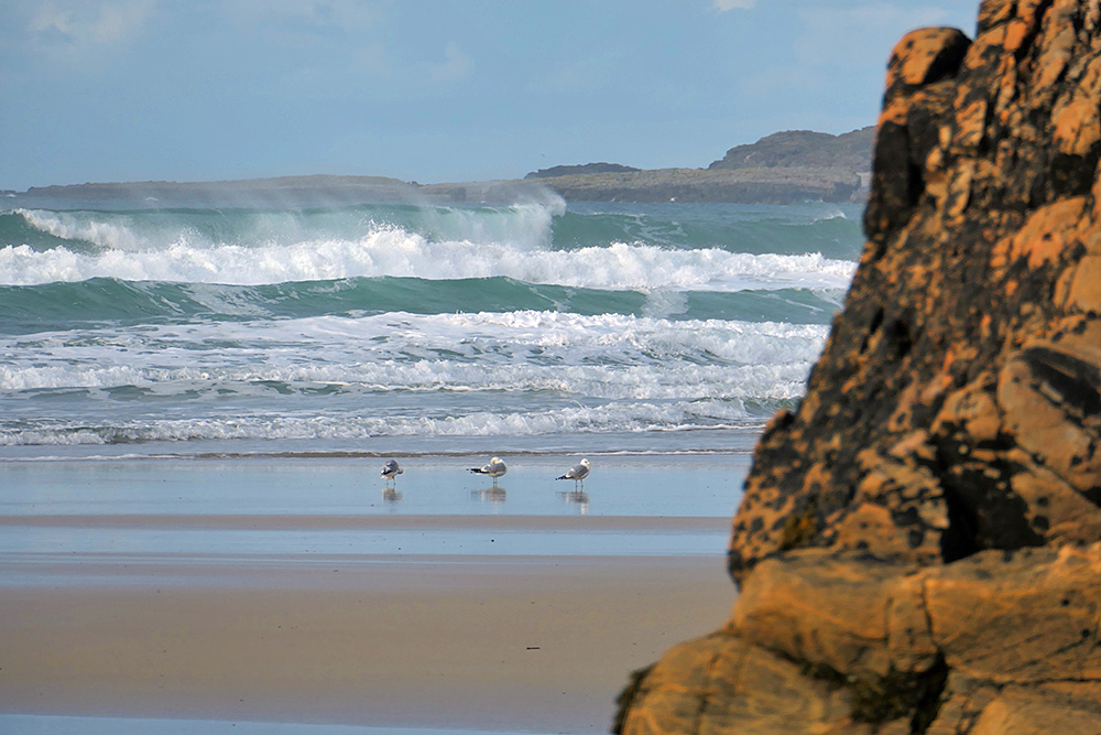 Picture of a view out on to a beach and a bay with breaking waves from behind some rocks. Three gulls on the beach.