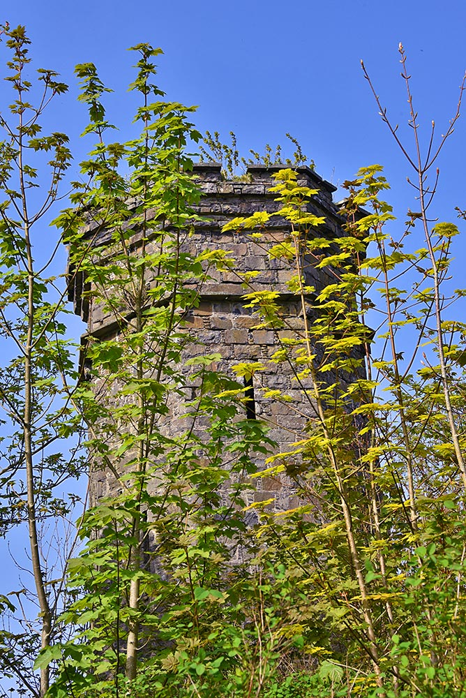 Picture of an old tower behind some small trees with fresh green leaves