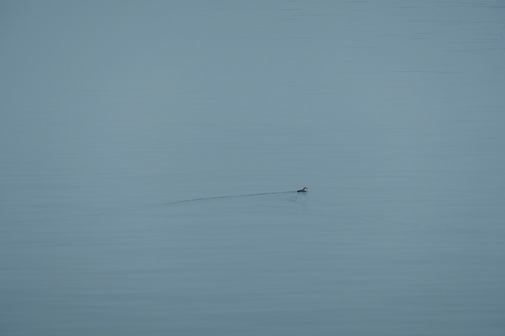Picture of a Diver in the haze from the Islay ferry