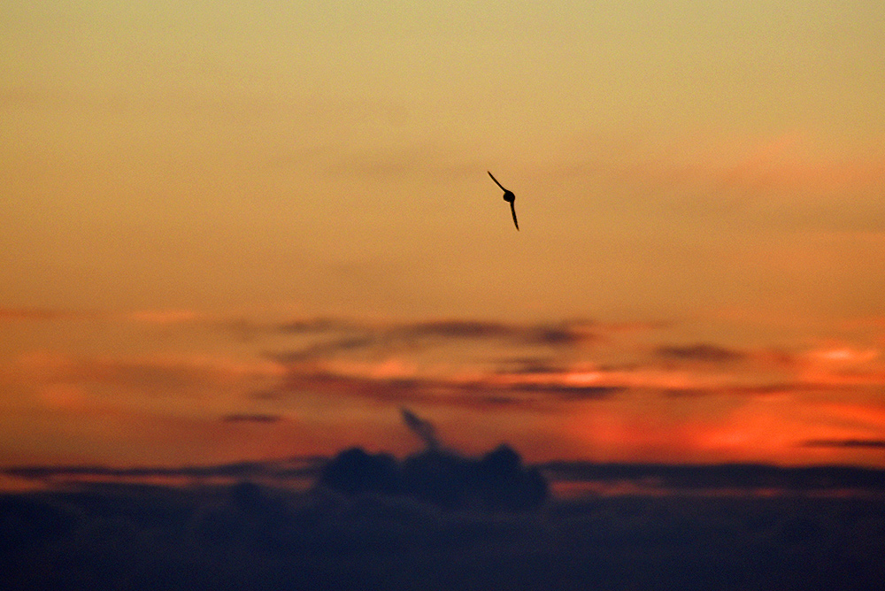 Picture of a bird flying away into the distance in the last light of the gloaming