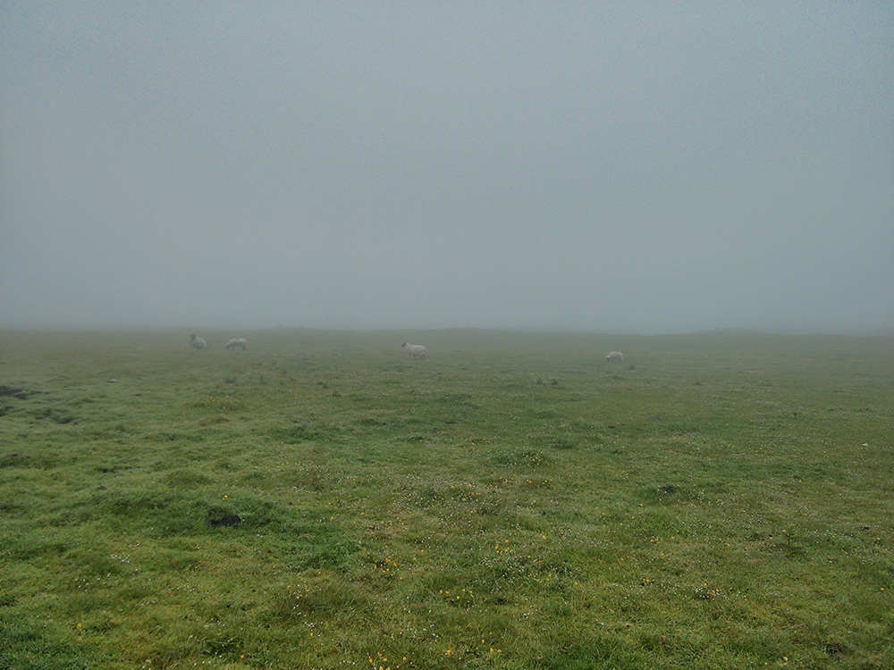 Picture of a field with a few sheep on a foggy morning