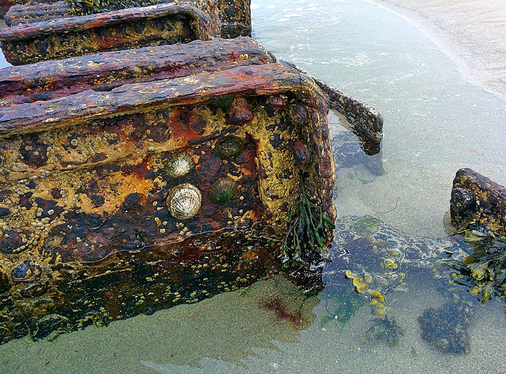Picture of limpets on a rusty wreck
