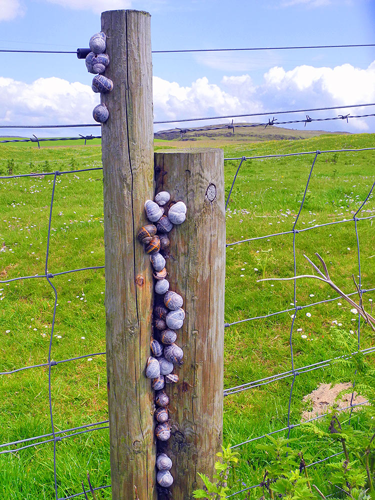 Picture of a large number of snails on a fence post