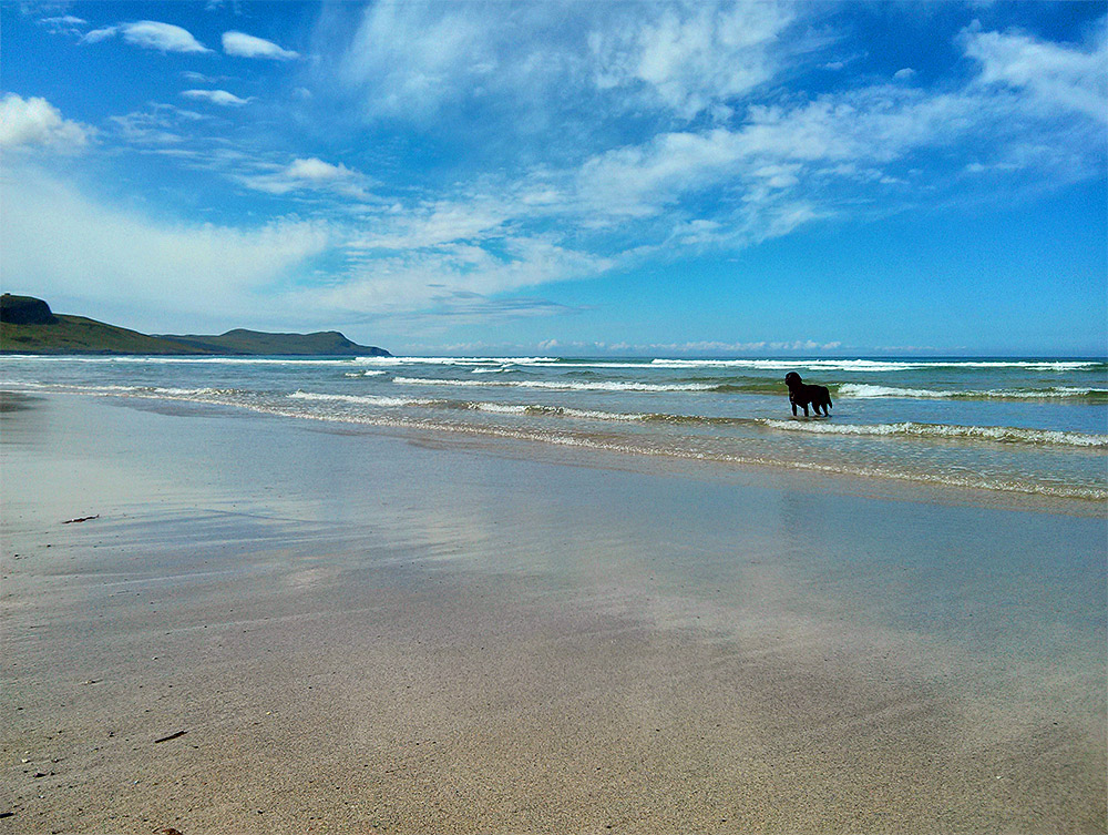 Picture of a black dog standing in waves rolling out on a beach on a sunny June day