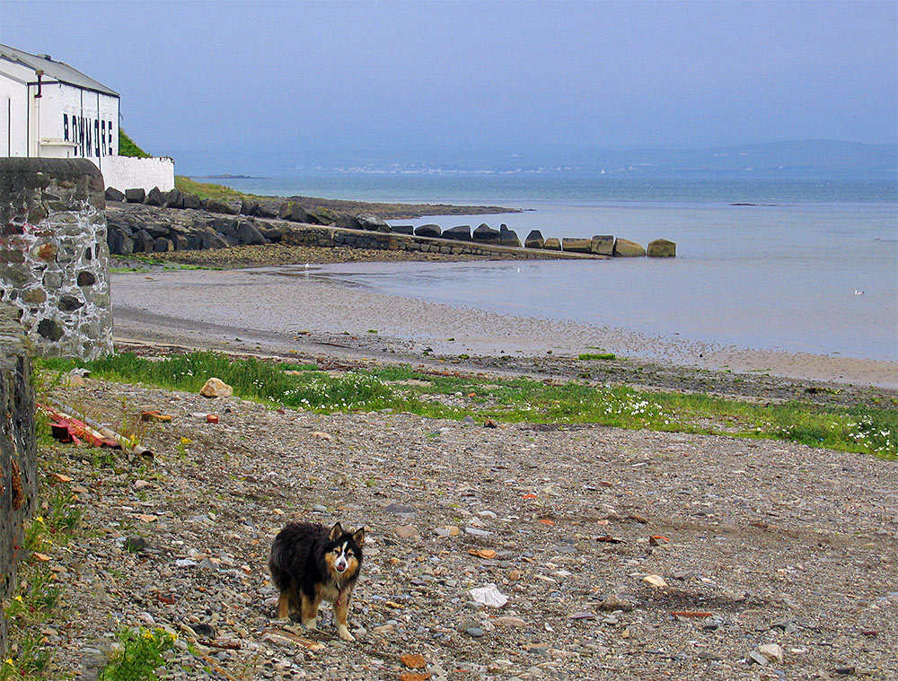 Picture of a dog on a small stony beach below Bowmore distillery